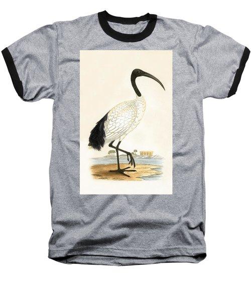 Sacred Ibis Baseball T-Shirt