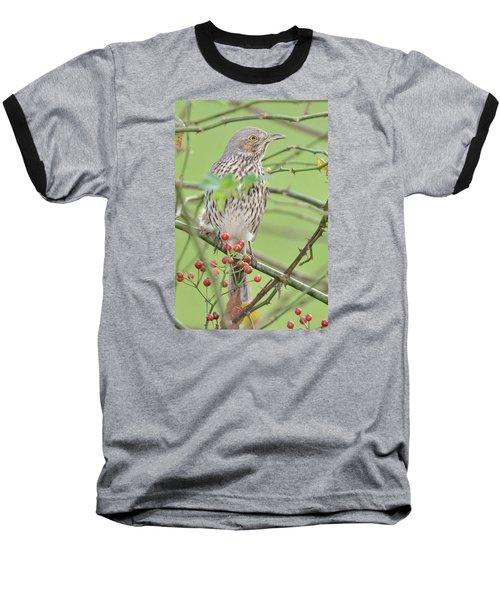 Sage Thrasher Baseball T-Shirt by Alan Lenk