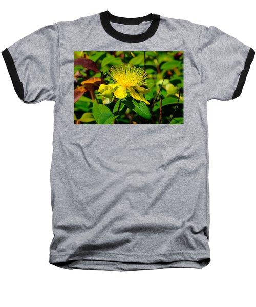 Saint John's Wort Blossom Baseball T-Shirt
