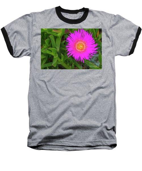 Sally-my-handsome Succulent Flower - Carpobrotus Acinaciformis Baseball T-Shirt by Jivko Nakev