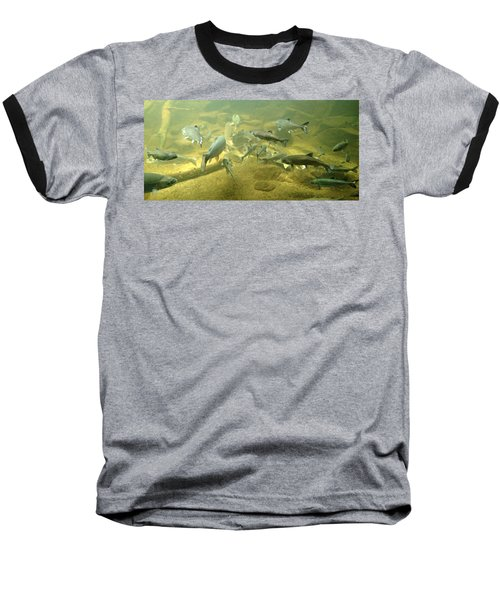 Baseball T-Shirt featuring the photograph Salmon And Sturgeon by Katie Wing Vigil