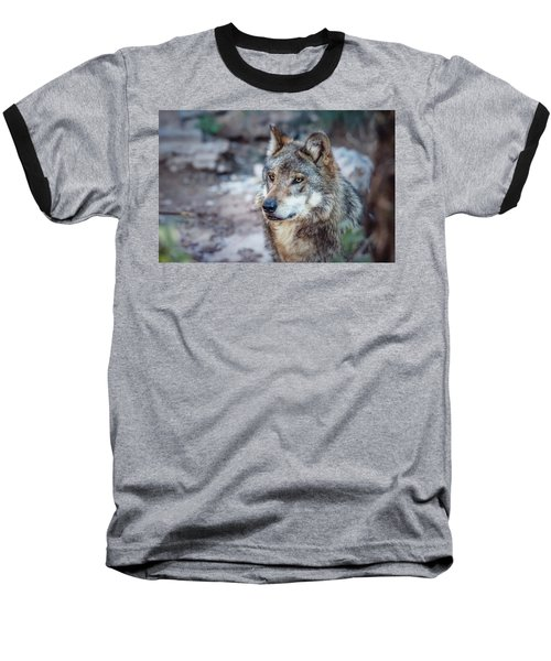 Sancho Searching The Area Baseball T-Shirt