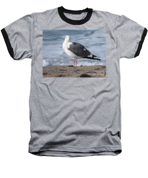 Santa Monica Seagull Baseball T-Shirt by Margaret Brooks