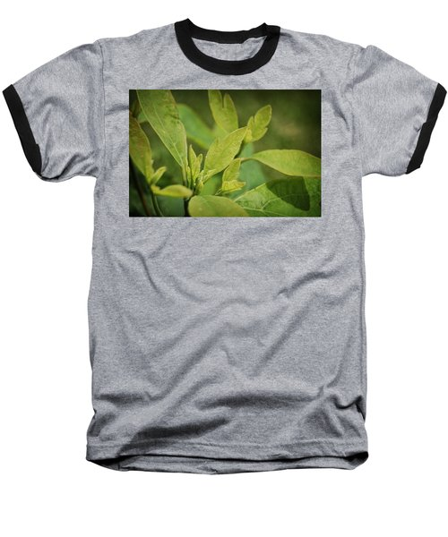 Sassafras Tree Baseball T-Shirt