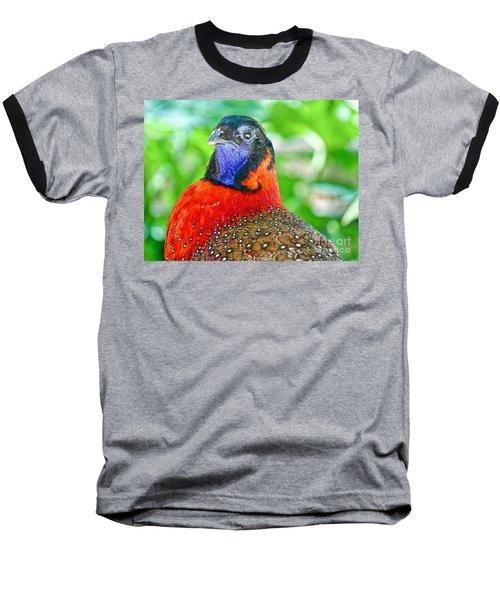 Satyr Tragopan  Baseball T-Shirt by Judy Kay