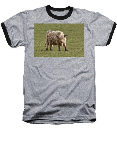 Sauvie Island Cow Baseball T-Shirt