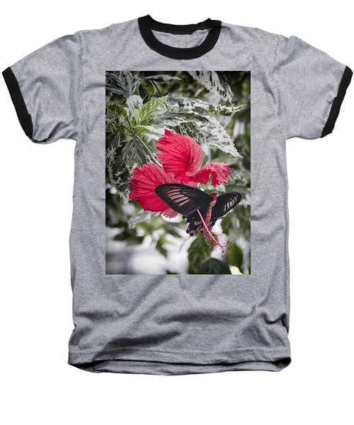 Scarlet Mormom Butterfly On Hibiscus Baseball T-Shirt by Shirley Mitchell