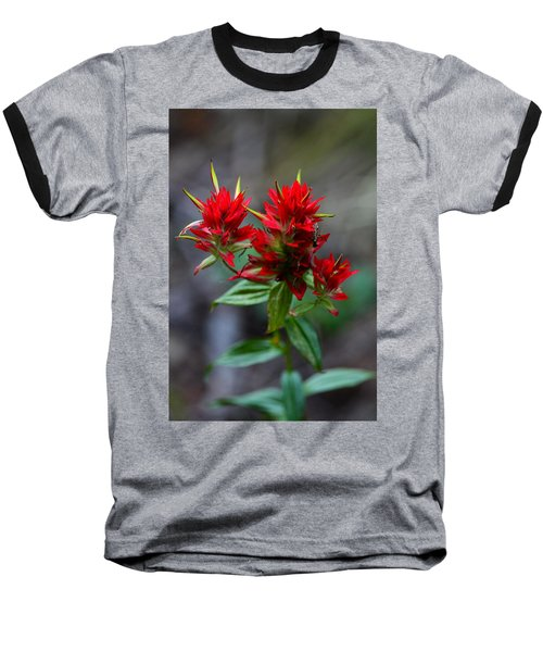 Scarlet Red Indian Paintbrush Baseball T-Shirt