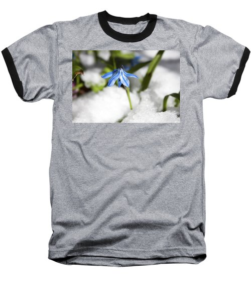 Scilla In Snow Baseball T-Shirt by Jeff Severson