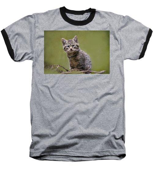 Scottish Wildcat Kitten Baseball T-Shirt