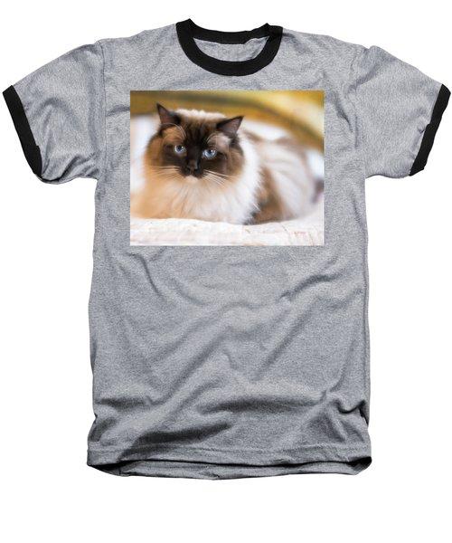 Seal Point Bicolor Ragdoll Cat Baseball T-Shirt
