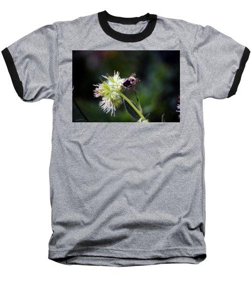 Searching For Pollen Baseball T-Shirt