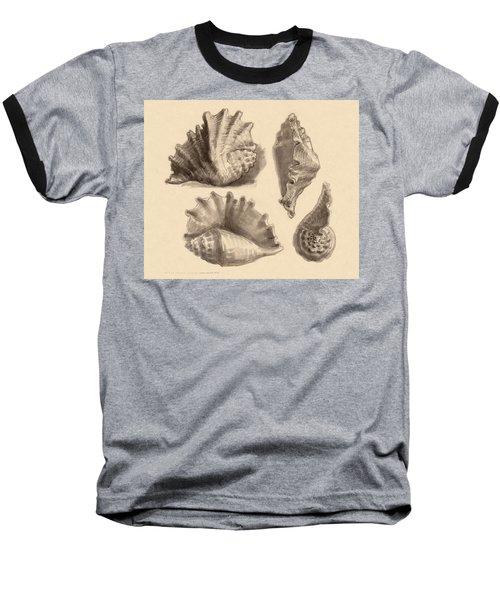 Seba's Spider Conch Baseball T-Shirt