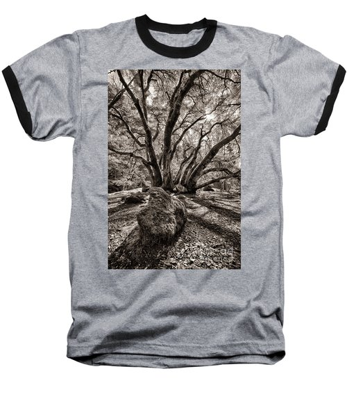 Shadow Tree Baseball T-Shirt
