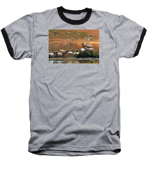 Sheep Country Baseball T-Shirt