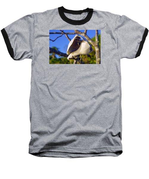 Shell On Brach Of Mangrove Tree At Barefoot Beach In Napes, Fl Baseball T-Shirt