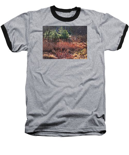 Shimmering Sunlight On The Cattails Baseball T-Shirt by Joy Nichols