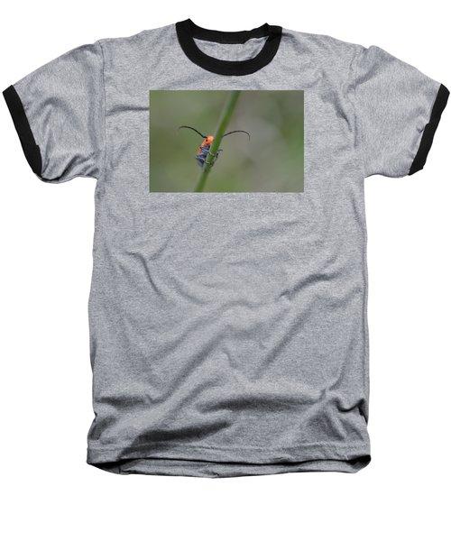 Shy Beetle Baseball T-Shirt by Janet Rockburn