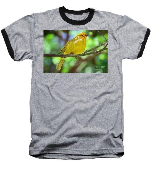Sicalis Flaveola Baseball T-Shirt