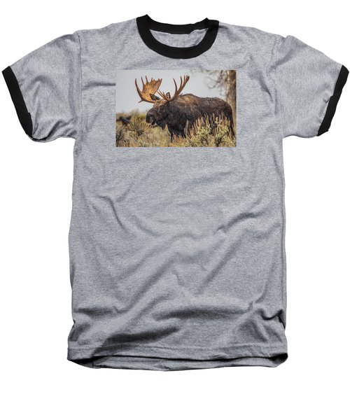 Silly Moose  Baseball T-Shirt by Kelly Marquardt