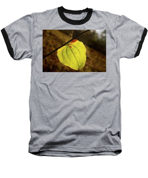 Single Greenbrair Leaf In Evening Sun Baseball T-Shirt