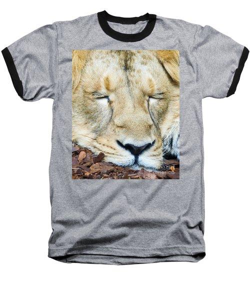 Sleeping Lion Baseball T-Shirt