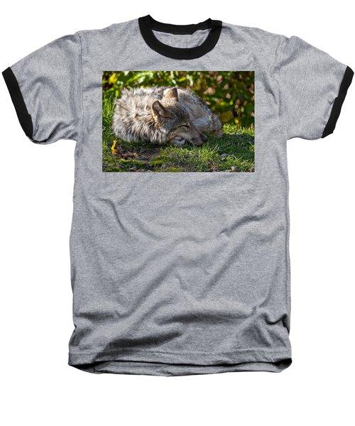 Baseball T-Shirt featuring the photograph Sleeping Timber Wolf by Michael Cummings