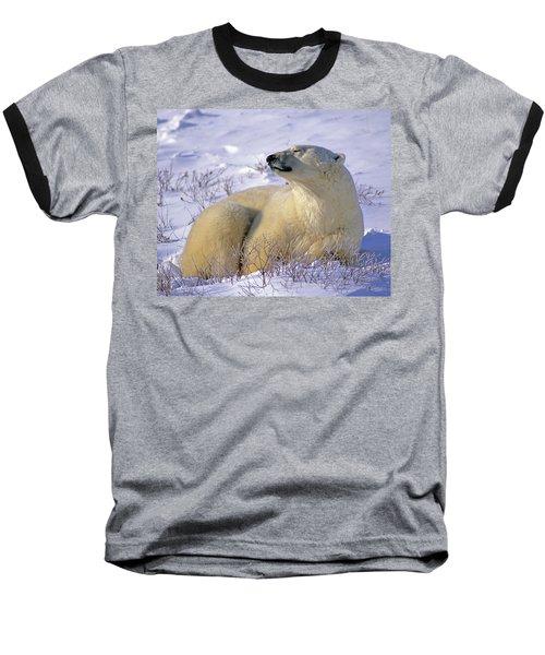Sleepy Polar Bear Baseball T-Shirt by Tony Beck