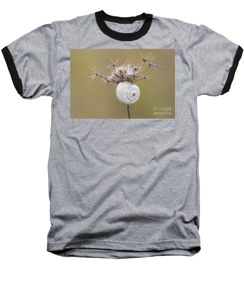 Small Snail Shell Hanging From Plant Baseball T-Shirt