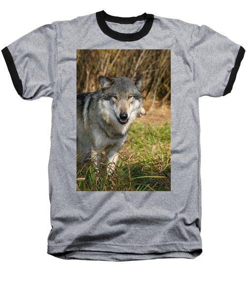 Smiling Wolf Baseball T-Shirt