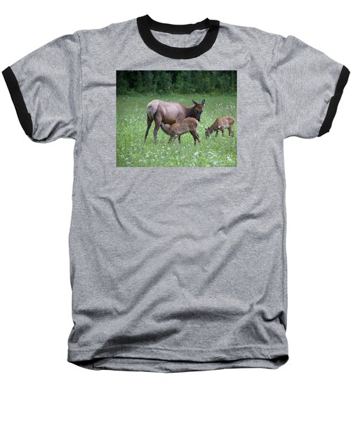 Smoky Mountain National Park Elk Cow Nursing Calf Baseball T-Shirt by Nature Scapes Fine Art