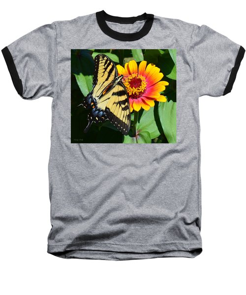 Snacking Tiger Swallowtail Butterfly Baseball T-Shirt