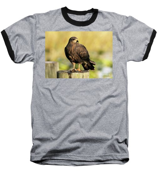 Snail Kite With A Snack Baseball T-Shirt