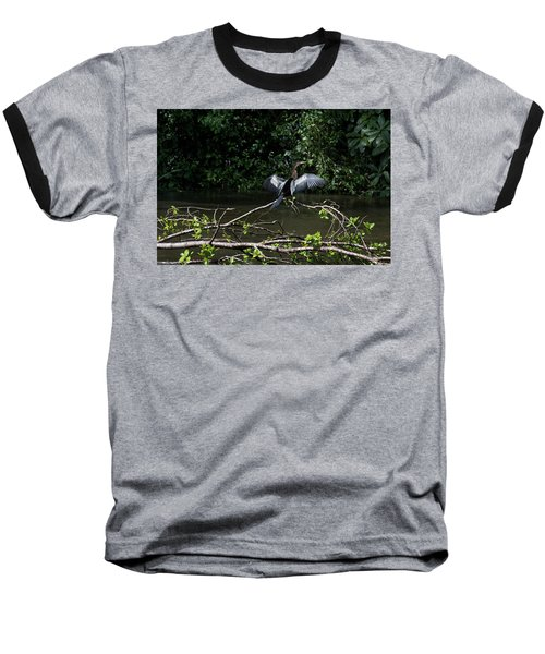 Snake Bird Perching Baseball T-Shirt by James David Phenicie
