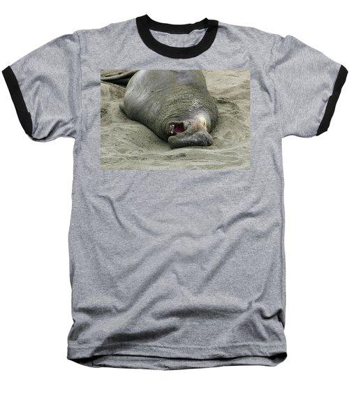 Snoring Elephant Seal Baseball T-Shirt