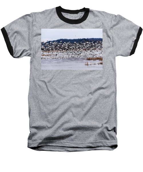 Snow Geese At Squaw Creek Baseball T-Shirt by Edward Peterson