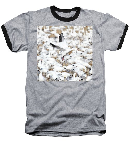 Snow Goose Lift-off Baseball T-Shirt