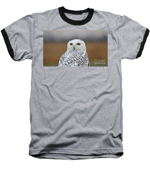 Snow Owl Strare Baseball T-Shirt