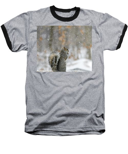 Snow Squirrel Baseball T-Shirt by Diane Giurco