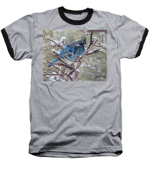 Snowy Bluejay  Baseball T-Shirt