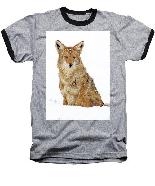Snowy Coyote Baseball T-Shirt