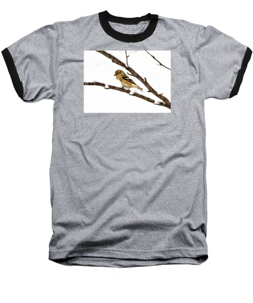 Snowy Day Goldfinch Baseball T-Shirt by Betty Pauwels