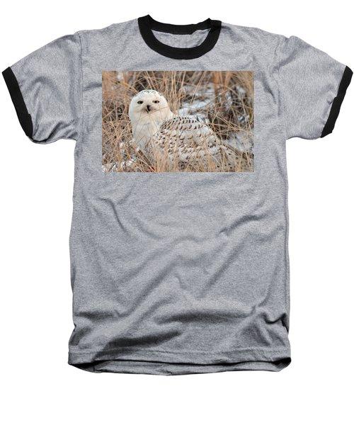 Snowy Owl Baseball T-Shirt by Nancy Landry