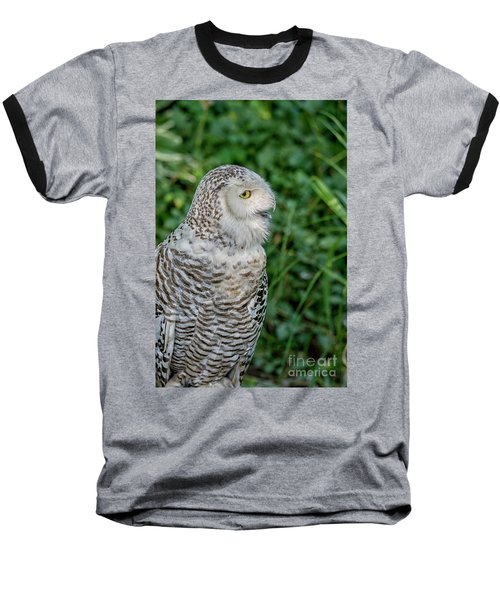 Baseball T-Shirt featuring the photograph Snowy Owl by Patricia Hofmeester