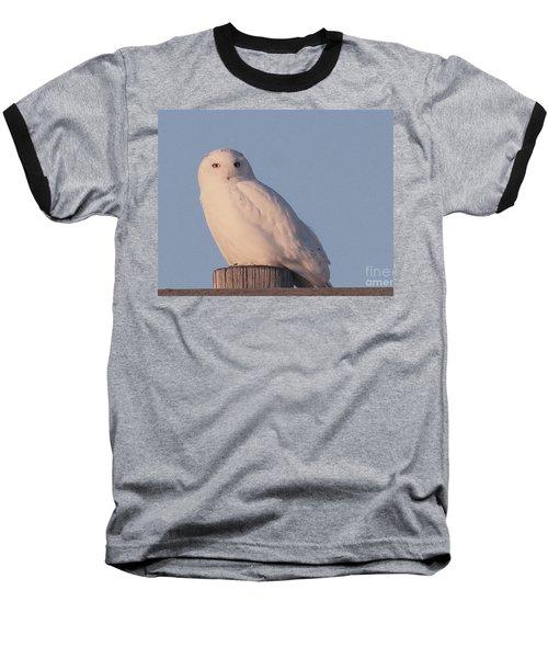 Snowy Owl Baseball T-Shirt