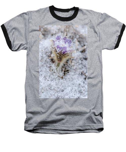 Snowy Pasqueflower Morning Baseball T-Shirt