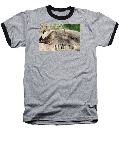 Song Sparrow Looks Curious Baseball T-Shirt