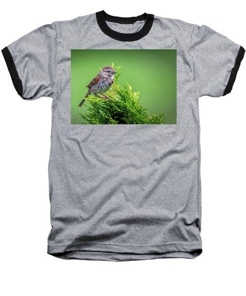 Song Sparrow Perched - Melospiza Melodia Baseball T-Shirt