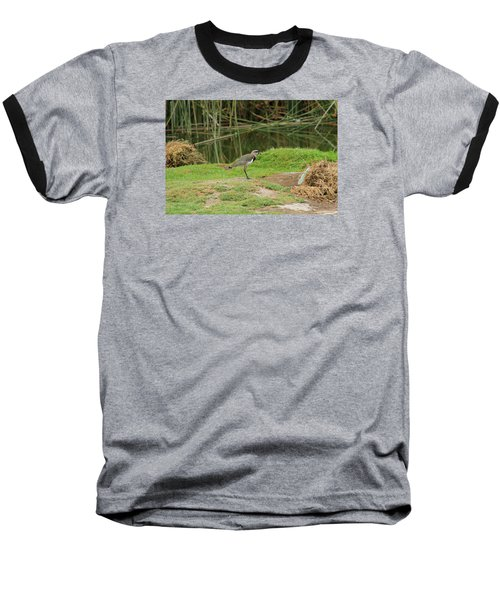Southern Lapwing On Shore Baseball T-Shirt by Robert Hamm