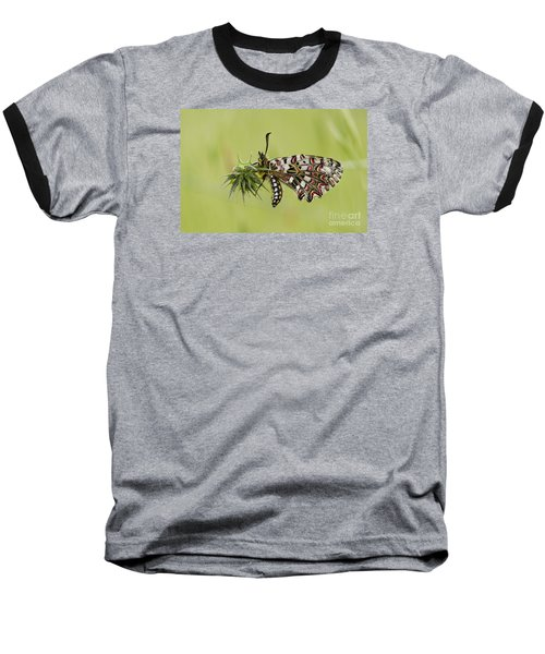 Spanish Festoon Butterfly Baseball T-Shirt by Perry Van Munster